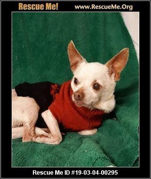 Florida Chihuahua Rescue Adoptions Rescue Me Chihuahua