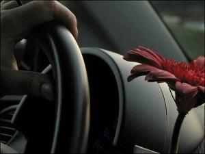 Regras para os passageiros engraçado Carro Novidade Vinyl Decal Adesivo