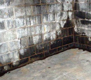 How To Get Rid Of Black Mold In Basement Tips To Remove From Walls Mold In Basement Concrete Block Walls Cinder Block Walls