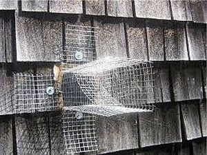 How To Get Rid Of Bats Know All The Existing Solutions In 2020 Getting Rid Of Bats Bat Houses Old Barns