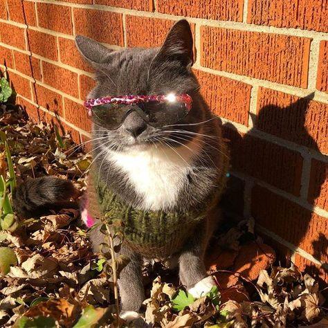 polarizedsunglasses You Make Me Shine 🍁 🌟 It's...