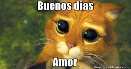 Memes Buenos Dias Amor 4 Frases De Disculpas Memes De Perdon Meme Gato
