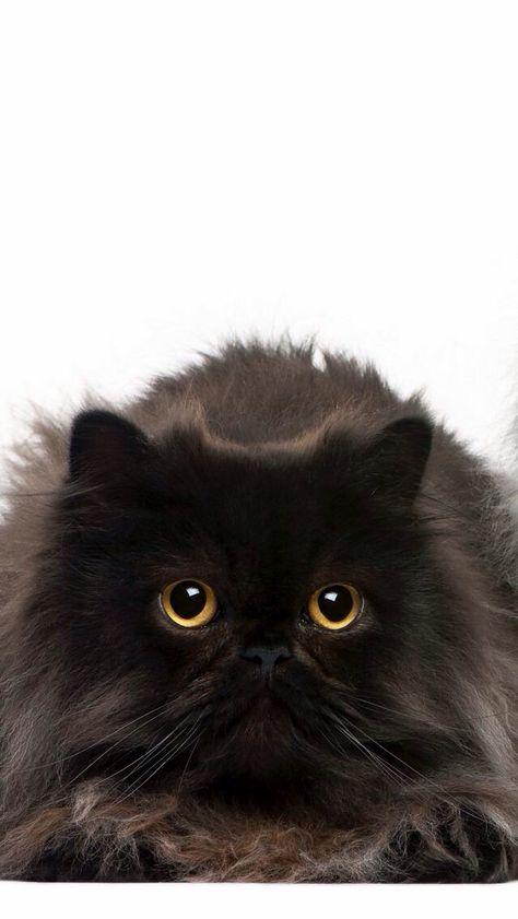 Black cat ~ Mia ❤️