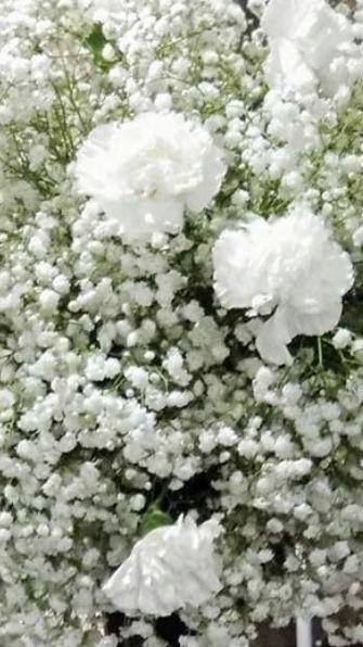 Baby Breath Flowers In 2020 Baby S Breath Wedding Flowers Flowers For Sale Babys Breath