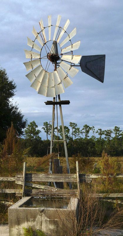 Windmill Pump Charles Bronson State Forest Art Print By Chris