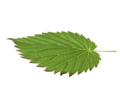 Leaf Free 3d Model 3d Model Free Plants Plants