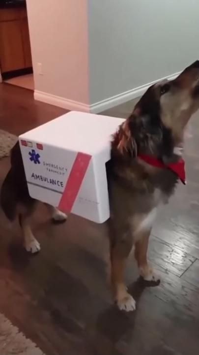 Dog ambulance