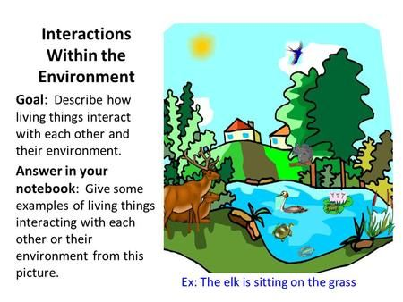 Interactions Within The Environment Ecosystems How To Introduce Yourself Student Created