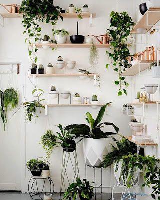 Kwiaty Zielone W Domu House Plants Indoor Plant Decor Indoor Easy House Plants