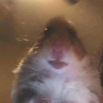 Patryk4357 167 0k Follower 9348 Folgen 631 0k Likes Schau Dir Tolle Kurzvideos Von Hamster Gang An Di 2021 Meme Anjing Lucu Hamster Mengagumkan