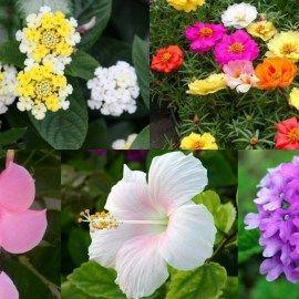 Fiori Da Giardino.10 Magnifici Fiori Da Coltivare In Pieno Sole Con Immagini