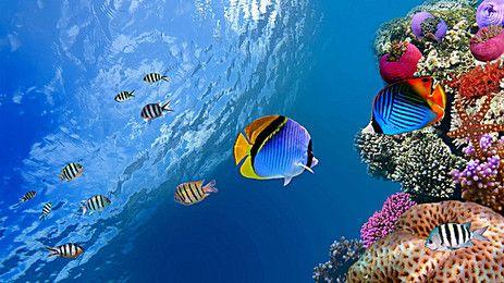 Peixes Fundo Do Mar Papel De Parede De Peixe Papel De Parede De Animais Peixes Tropicais