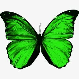 Antique Green Butterfly Butterfly Clipart Butterflywing Antique Clipart Png Transparent Image And Clipart For Free Download Green Butterfly Butterfly Clip Art Green Aesthetic