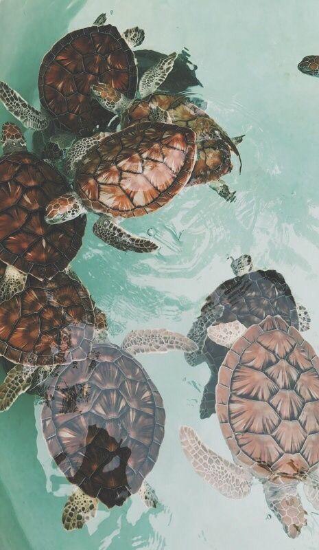 Les Tortues Wallpaper Bebe Cute Turtles Animals Animals Beautiful