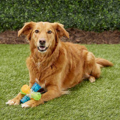Outward Hound Triple Jack Chew Dog Toy Chewy Com Dog Chew Toys