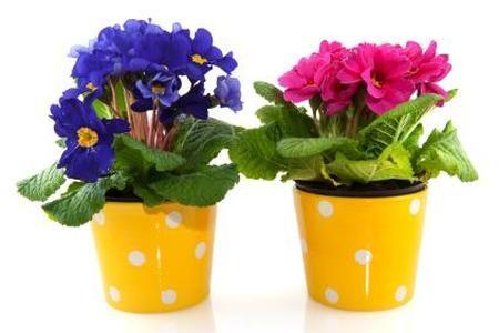 Rosliny Doniczkowe Cieniolubne Ndash Peperomia In 2021 Planter Pots Planters Pot