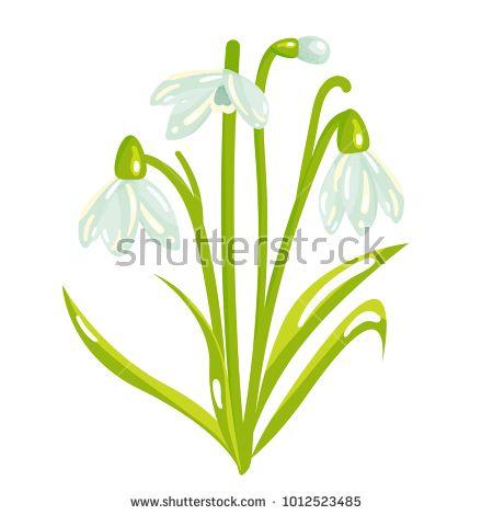 Vector Cartoon Snowdrop Spring Flower Illustration