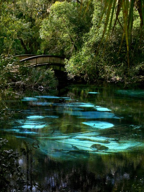 16. This picture of Fern Hammock Springs in Ocala National Forest is aglow with ethereal beauty.