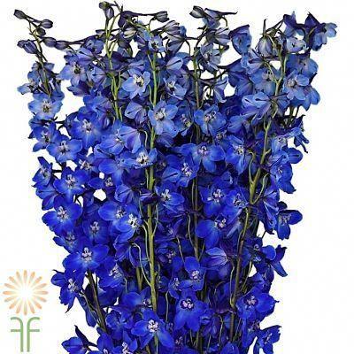Pin On Wedding Flowers