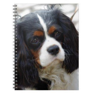 King Charles Cavalier Portrait Notebook Zazzle Com With Images Cavalier King Charles Spaniel Tricolor King Charles Spaniel Cavalier King Charles Spaniel