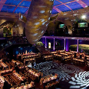 American Museum Of Natural History Wedding Reception Underneath The Blue Whale All My Nerd Dreams Would Come True Ggrjfvuf Pinterest