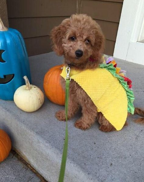 The 38 Best Dog Halloween Costumes of All Time | Best dog
