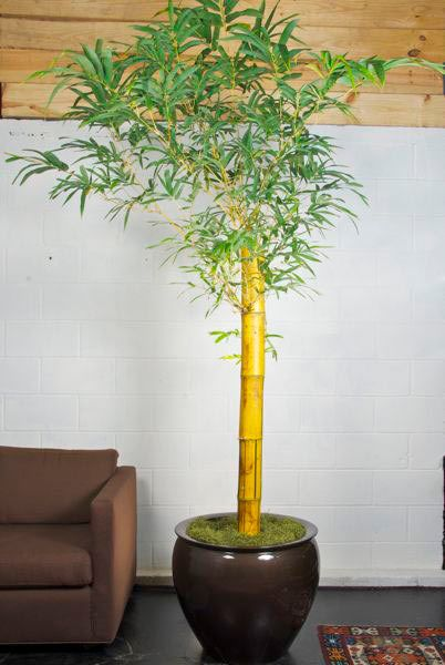 Large Indoor Plants For Sale Near Me