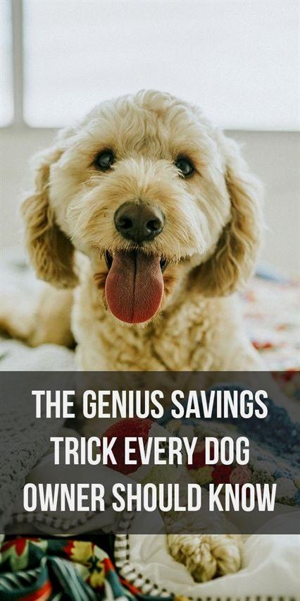 Dog Training Come When Called Dog Training Pdf Dog Training 4