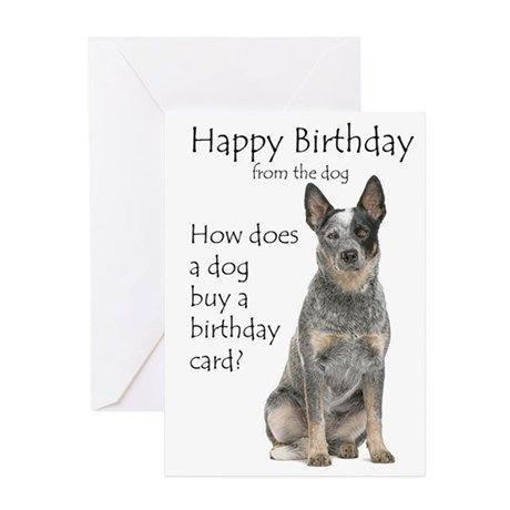 Australian Cattle Dog Birthday S Greeting Cards Birthday Greeting Cards Birthday Cards Dog Birthday