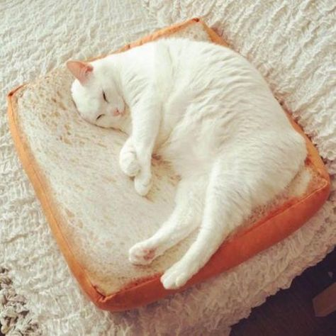 This novelty cat bed has a soft, short, plush surface and elastic sponge core. The unique toast slice shape looks delicious and attractive. These novelty cat beds offer your cat a nice place to play, sleep and rest.