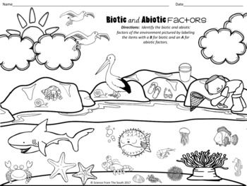 Biotic And Abiotic Factors Illustration For Using As Notes Or A