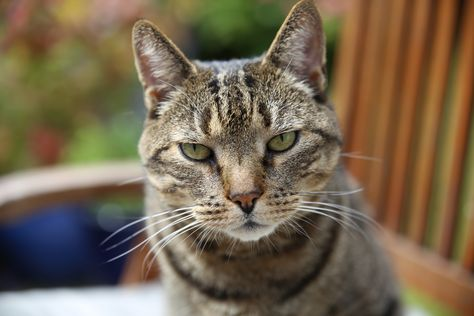Kat - close-up