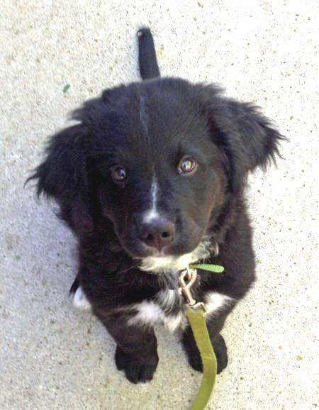 Pin By Tami T Crutcher On Bernese Mountain Dog Bernese Mountain Dog Mix Puppy Mix Dog Mixes