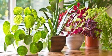 30 Easy Houseplants