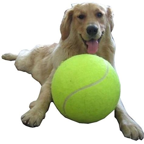 Gaint Dog Tennis Ball Thrower Large Pet Play Toys 9 5 Funny Play Ball Find Out More About The Great Product At Th Pet Dogs Puppies Tennis Ball Dog Toy Ball