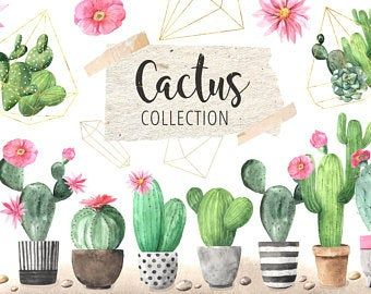 Cactus Png Files Etsy Cactus Illustration Watercolor Cactus Plants With Pink Flowers