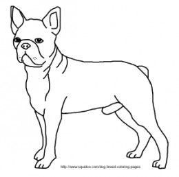 Boston Terrier Coloring Pages Horse Coloring Pages Boston Terrier Art Horse Coloring