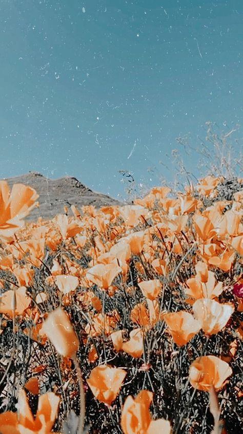 please summer please stay, Beautiful flower iPhone wallpaper #wallpaper #summerwallpaper summer iphone wallpaper