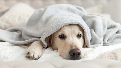 Pin On Pet Health Dog Care