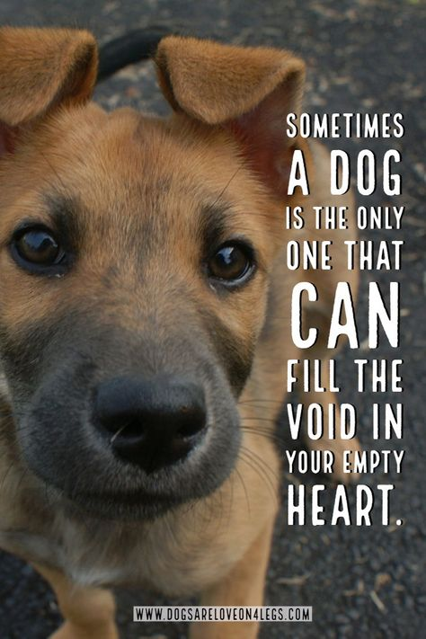 Dog Quote Sometimes A Dog Is The Only One Dog Dog Quotes Inspirational Quotes Funny Quotes Li Dog Quotes Inspirational Dog Quotes Funny Dog Quotes