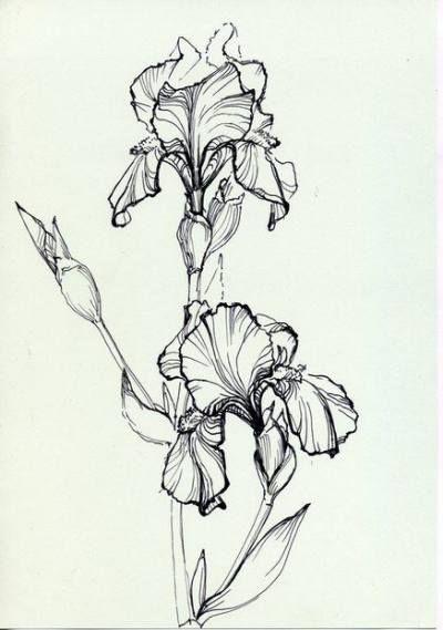 Flowers Drawing Design Pattern Tattoo Ideas 30 Best Ideas Drawing Tattoo Flowers Flower Sketches Flower Drawing Tattoo Drawings