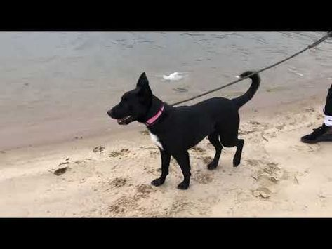 Puppy Clyde Posh Pets Long Beach Ny Youtube Nyc Dogs Puppies Pets