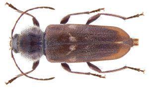 Hausbock Erkennen Und Bekampfen Holzbock Insekten Tiere