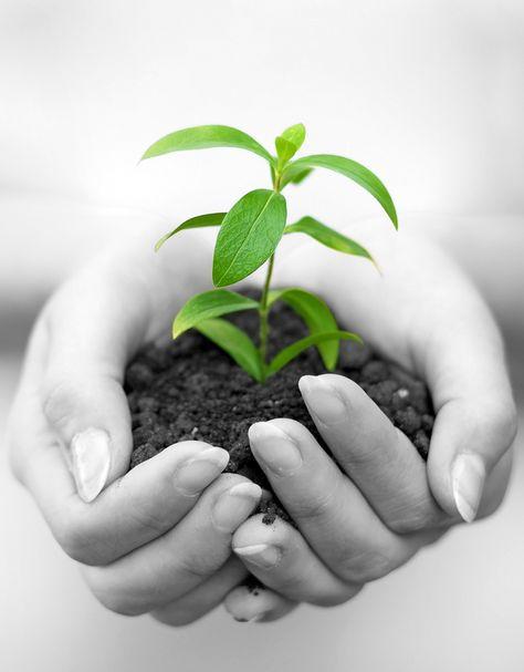 Plant Stem Cells For Anti Aging How Plant Stem Cells Work In Skin Care Plant Needs Plant Stem Cell Stem Cell Skin Care