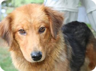 2 17 14 Voorhees Nj Chow Chow Shepherd Unknown Type Mix Meet