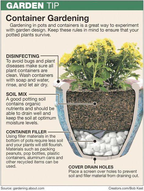 Vegetable Gardening Tips For Beginners In India But Gardening Tips For Dog Owners While Garde Container Gardening Garden Containers Container Gardening Flowers