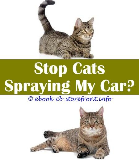 Cat Publish Remover Products