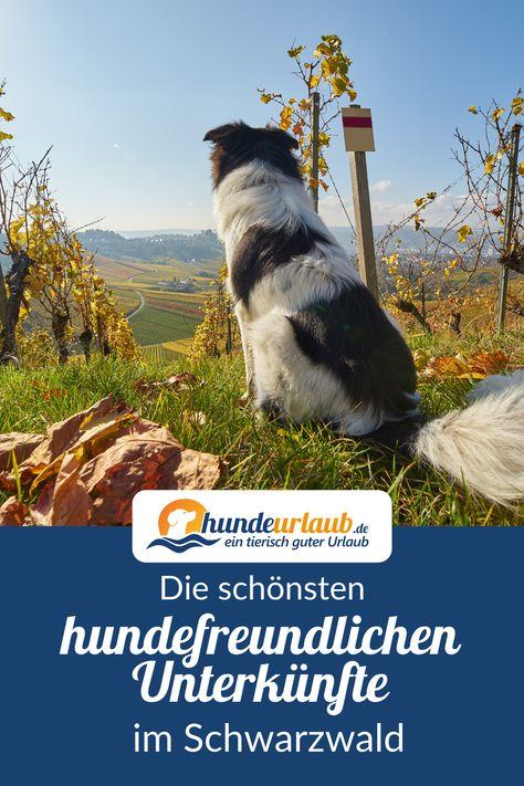 54 Schwarzwald - Urlaub mit Hund-Ideen in 2021 ...