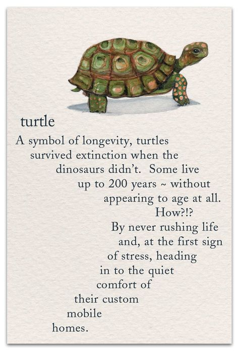 Inside Message: Here's to living the turtle's way! All the Best on Your Birthday  #cardthartic #greetingcard #birthdaycard #turtle #animals #reptile #stationary #meaningsoflife #greetingcards