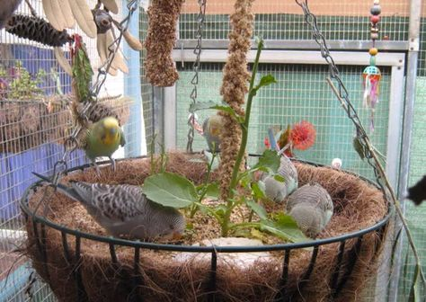 Hanging Planter Bird Foraging - PetDIYs.com Love this idea! And I already have 2 of these in storage I'm not even using...so out of storage it comes ;)